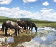 Koni stojaki obok jeziora fotografia stock