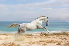 Konia bieg Zdjęcia Stock