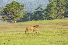 Konia bieg Fotografia Stock