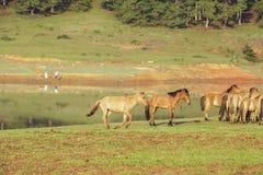 Konia bieg Zdjęcie Stock