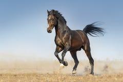 Konia bieg post Zdjęcia Royalty Free