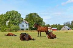 Konia gospodarstwo rolne Zdjęcie Royalty Free