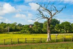 Konia gospodarstwo rolne Fotografia Stock