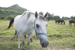 Konia gospodarstwo rolne Obrazy Royalty Free