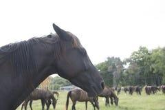 Konia gospodarstwo rolne Zdjęcie Stock