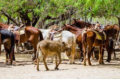 Konia gospodarstwo rolne w Cabo San Lucas, Meksyk fotografia stock