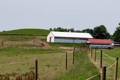 Konia gospodarstwo rolne w Ohio obraz stock