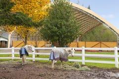 Konia gospodarstwo rolne z bielu ogrodzeniem i spadków kolorowymi liśćmi. obrazy royalty free