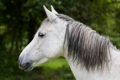 Konia head Zdjęcia Stock