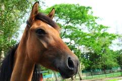 Konia head Zdjęcie Stock