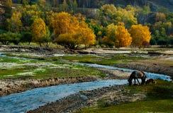 Konia i psa niedaleka zatoczka Fotografia Royalty Free