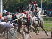 Konia kłusaka traken w nicielnica wyścigi konny na racecourse obrazy stock