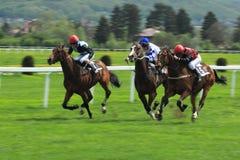 konia mhd Prague biegowy target917_0_ Zdjęcie Royalty Free