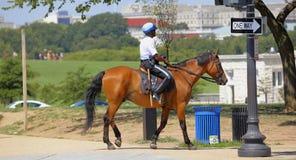 Konia milicyjny DC Obrazy Royalty Free