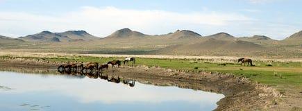 Konia napój od rzeki Zdjęcie Stock