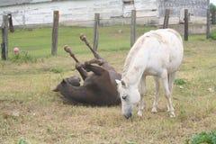 konia paśnik Zdjęcie Stock