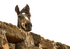 Konia patrzeć obraz stock