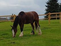 Konia pola gospodarstwo rolne Obrazy Royalty Free