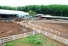 Konia pola ogrodzenie Zdjęcia Stock