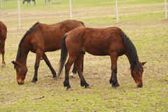 konia rancho dwa Zdjęcie Stock