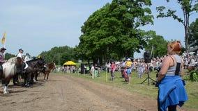 Konia siodłowy kowboj zbiory