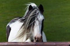 Konia stojak na wiatrze obrazy stock