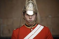Konia Strażnik Zdjęcia Royalty Free