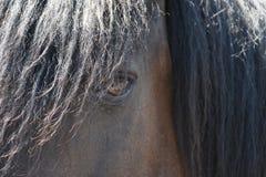 Konia zamknięty up dopatrywanie Zdjęcia Royalty Free