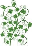 koniczyn dzień Patrick s święty Obraz Royalty Free