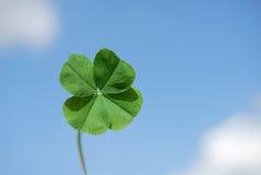 koniczynę four leafa niebo Zdjęcia Stock