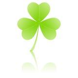 koniczyna leafed trzy Zdjęcie Royalty Free
