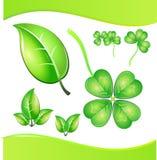koniczyna leafs drzewo Obrazy Royalty Free