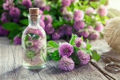 Koniczynowa tincture, infuzi lub koniczyny kwiatów wiązka Zdjęcia Royalty Free