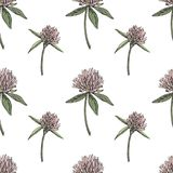 Koniczynowy liść i kwiaty wręczamy patroszoną bezszwową deseniową graficzną ilustrację świątobliwi szczęśliwi dzień patricks Obrazy Royalty Free