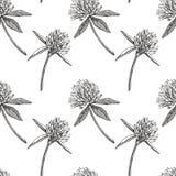 Koniczynowy liść i kwiaty wręczamy patroszoną bezszwową deseniową graficzną ilustrację świątobliwi szczęśliwi dzień patricks Zdjęcie Royalty Free