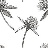 Koniczynowy liść i kwiaty wręczamy patroszoną bezszwową deseniową graficzną ilustrację świątobliwi szczęśliwi dzień patricks Fotografia Royalty Free