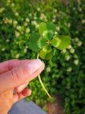Koniczynowy liść w ręce zdjęcie royalty free