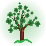 koniczyny cztery liść drzewo Fotografia Royalty Free