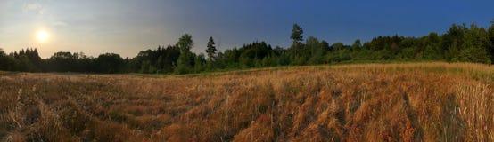 Koniczyny pole! zdjęcie royalty free