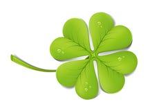 koniczyny zieleń Zdjęcia Royalty Free