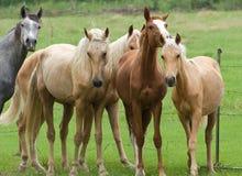 konie Obraz Stock