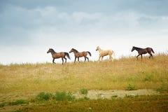 konie Zdjęcia Royalty Free