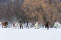 Konie biega w śniegu Zdjęcia Royalty Free