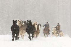 Konie biega w śniegu Obrazy Royalty Free