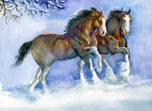 Konie biega w zimie Fotografia Stock