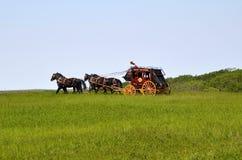 Konie ciągnie stagecoach fotografia royalty free