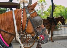 Konie czeka ich jeźdzów obraz royalty free