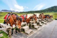 Konie dla jechać w kusasenri obszarze trawiastym Fotografia Royalty Free