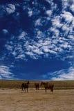 konie dzicy Zdjęcia Royalty Free