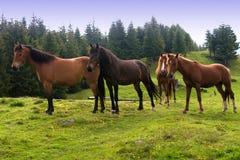 konie górskie zdjęcie royalty free